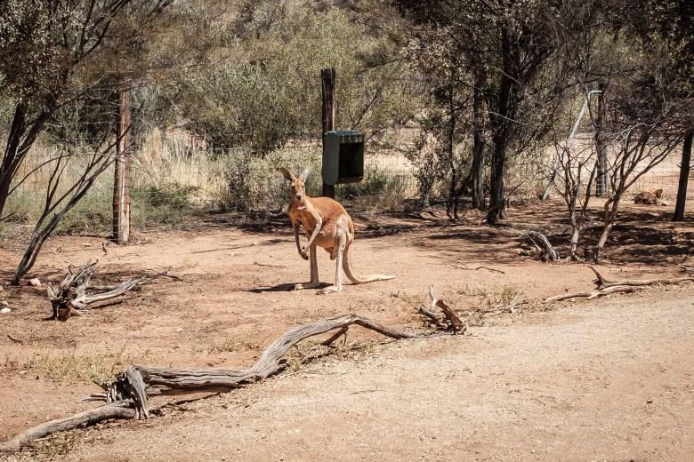 Australia Alice Springs 24