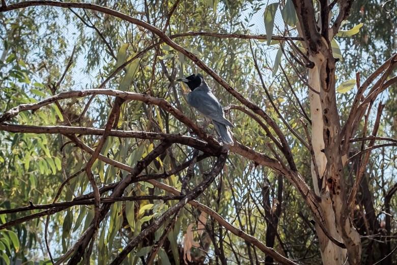 Australia Alice Springs 26