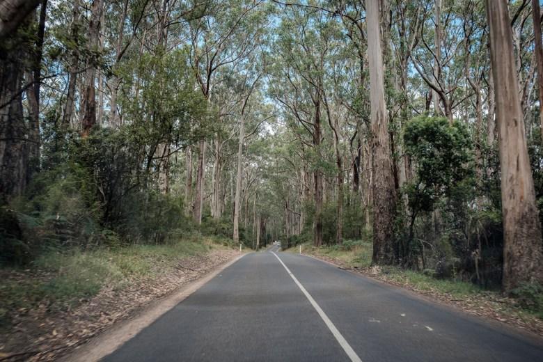 Australia Great Ocean Road 15