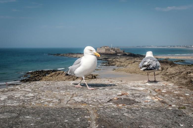 France Saint Malo 25