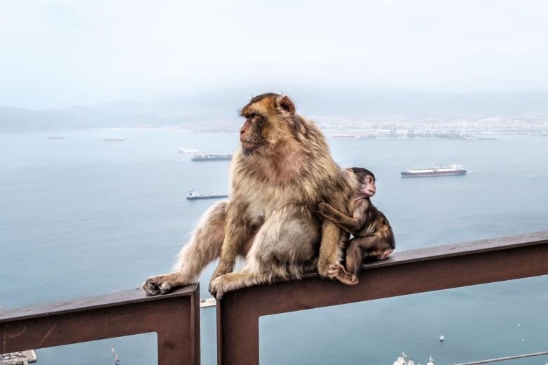 Gibraltar Rock 19