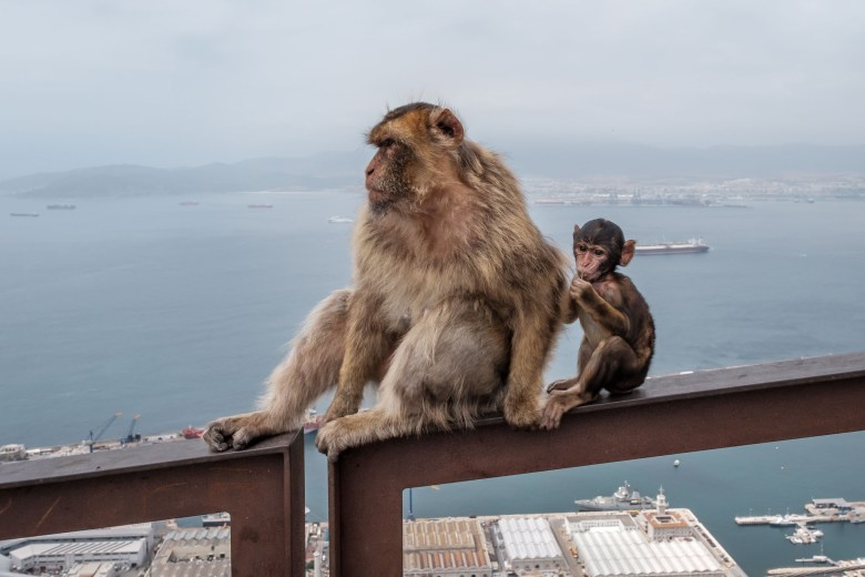 Gibraltar Rock 20