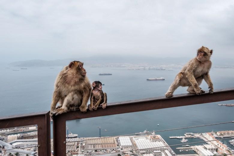 Gibraltar Rock 21
