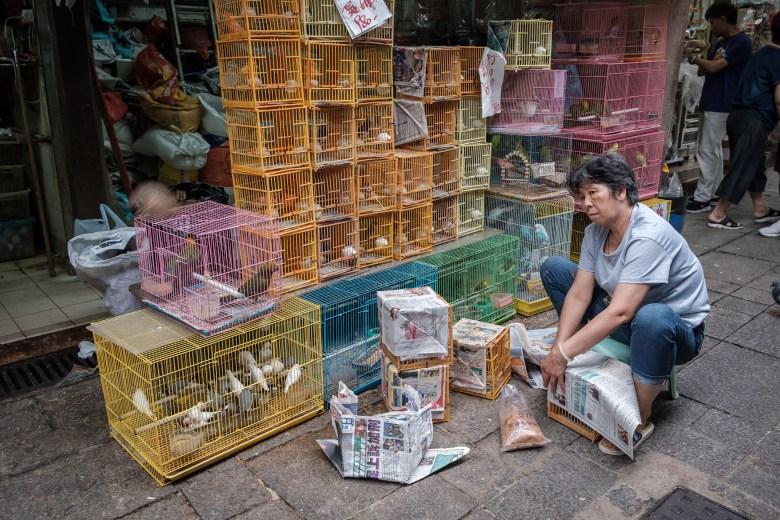 Hong Kong Kowloon 099
