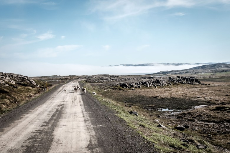 Iceland Westfjords 72