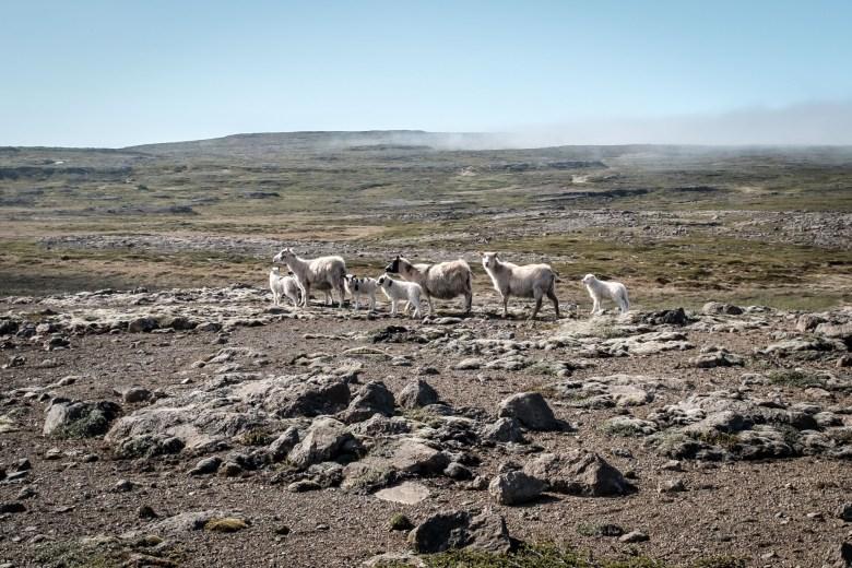 Iceland Westfjords 73