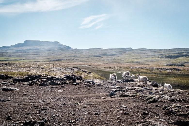 Iceland Westfjords 74