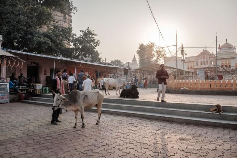India Orchha 40