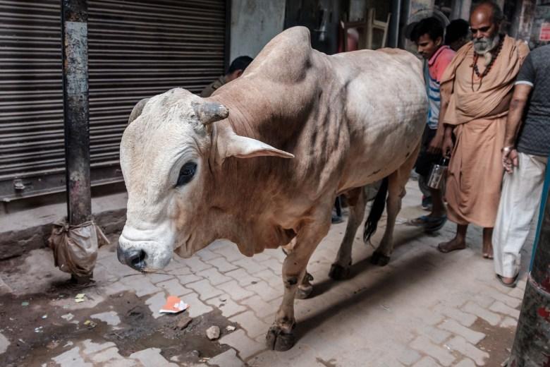 India Varanasi 114