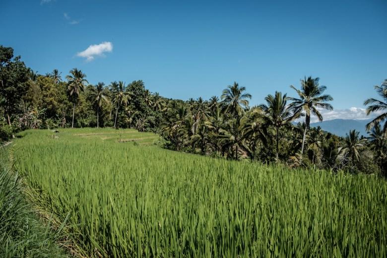 Indonesia Munduk 063
