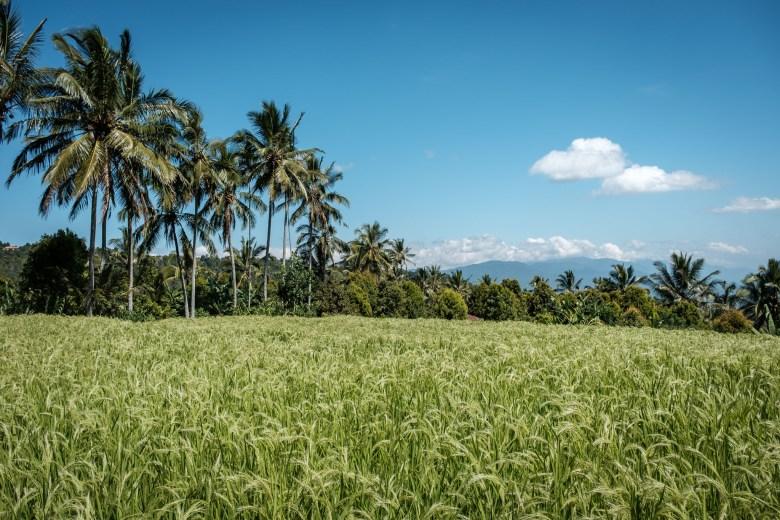 Indonesia Munduk 080