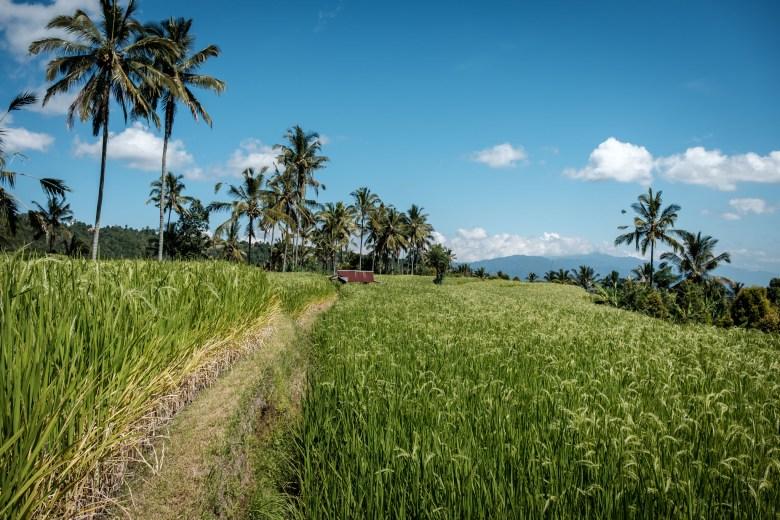 Indonesia Munduk 084