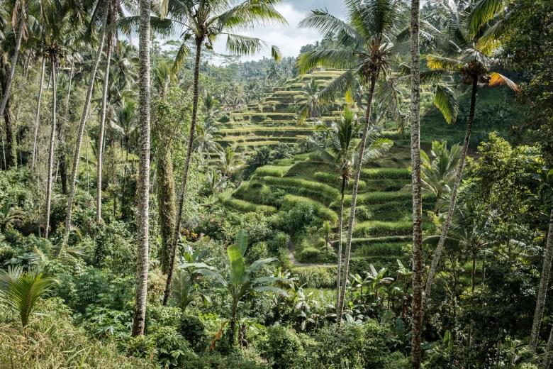 Indonesia Tirta Empul 10