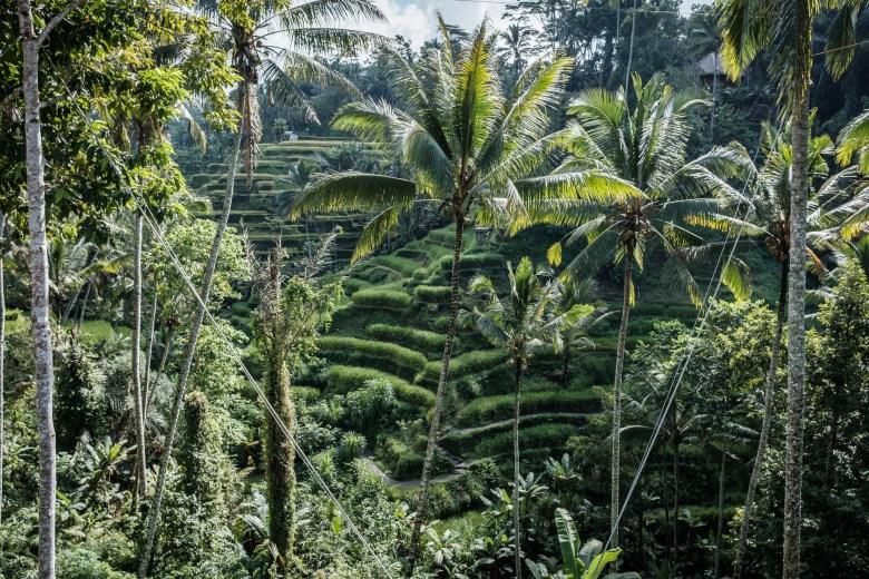 Indonesia Tirta Empul 16