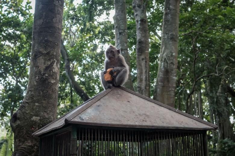 Indonesia Ubud 086