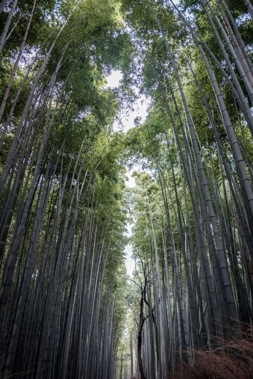 Japan Kyoto 106