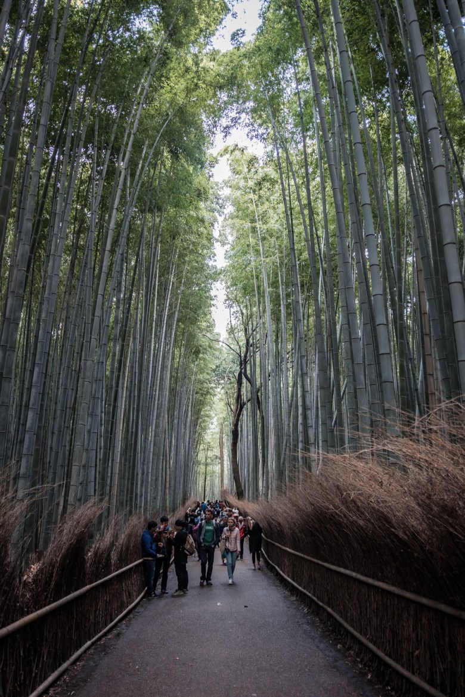 Japan Kyoto 107