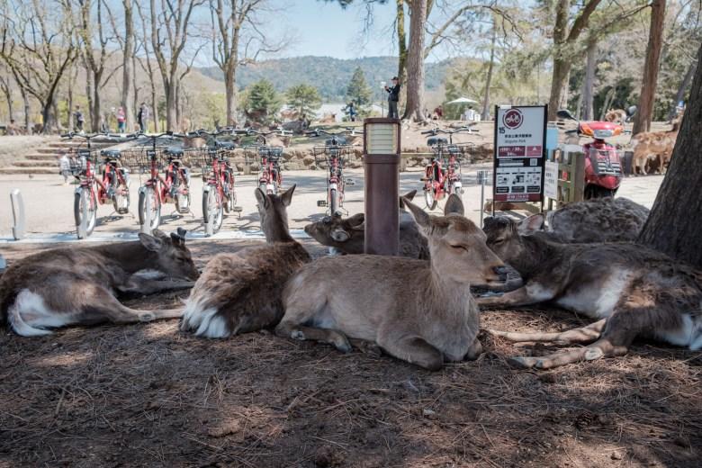 Japan Nara 02