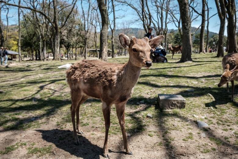 Japan Nara 03