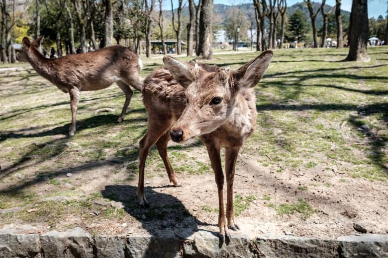 Japan Nara 04