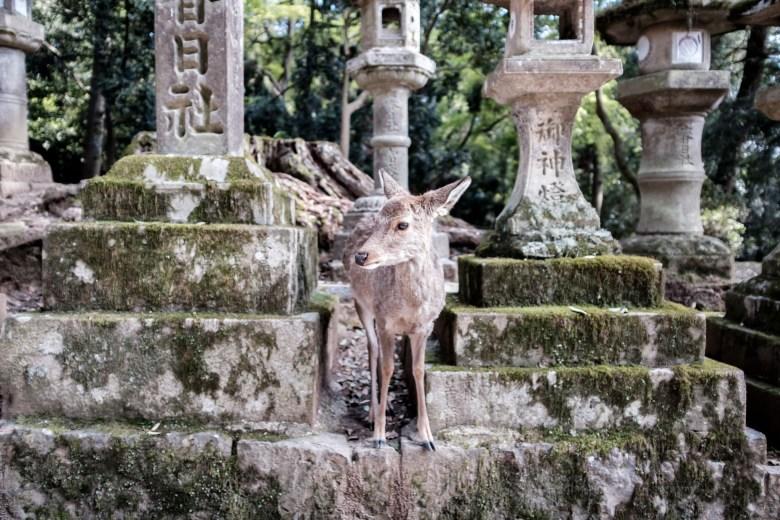 Japan Nara 40