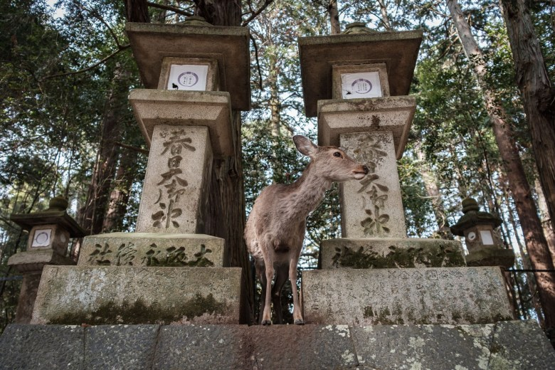 Japan Nara 46