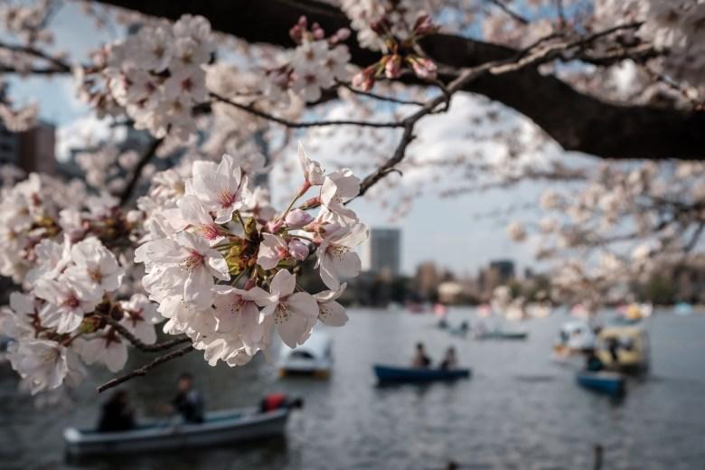 Japan Tokyo 032