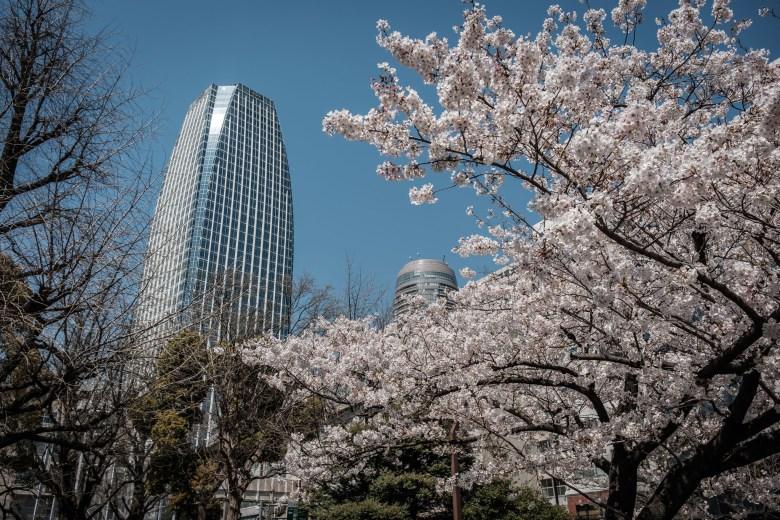 Japan Tokyo 164