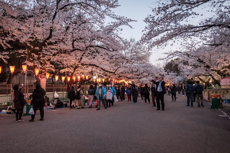 Japan Tokyo 254