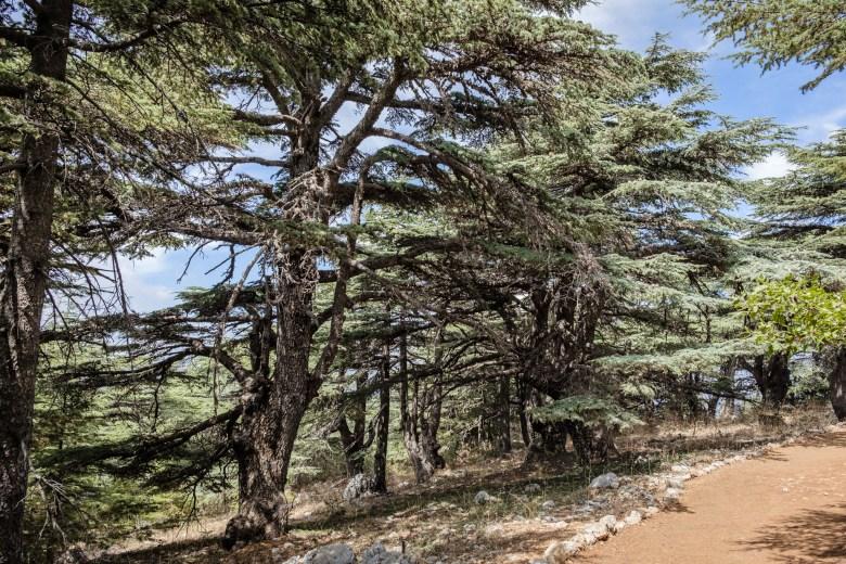 Lebanon Barouk 03