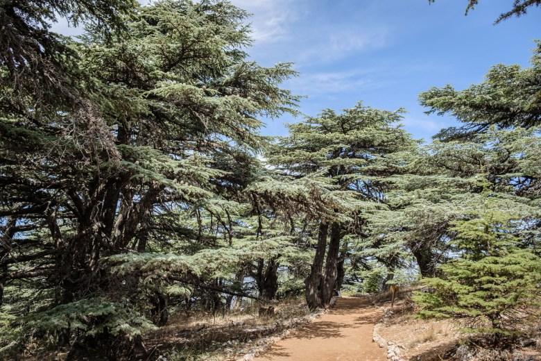 Lebanon Barouk 04