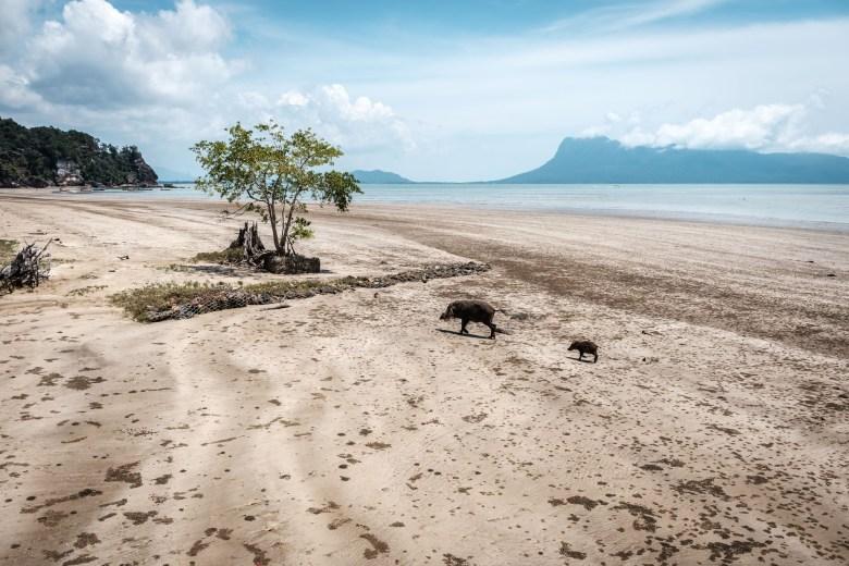 Malaysia Bako National Park 018