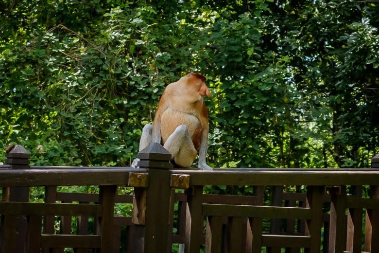 Malaysia Bako National Park 044