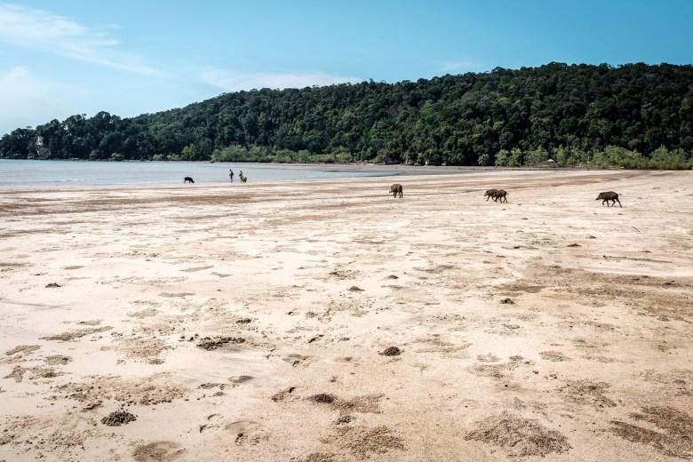 Malaysia Bako National Park 051