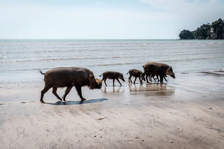 Malaysia Bako National Park 054