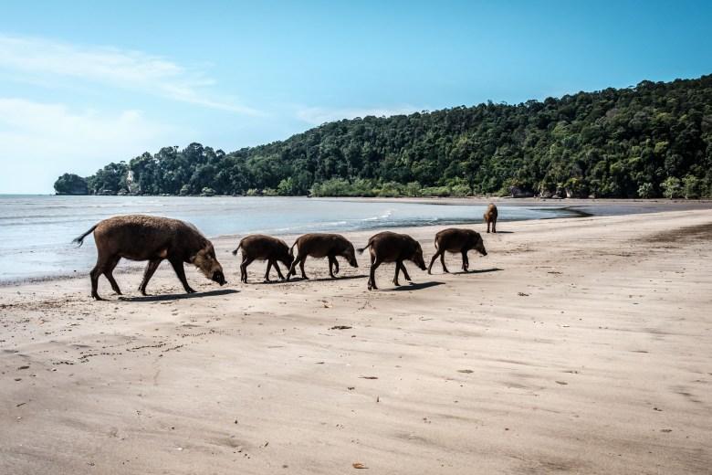 Malaysia Bako National Park 055