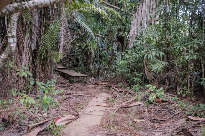 Malaysia Bako National Park 062