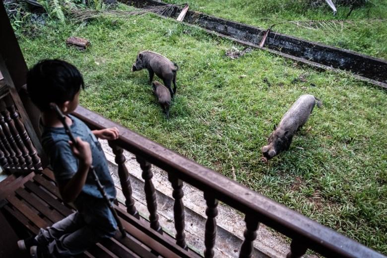 Malaysia Bako National Park 068