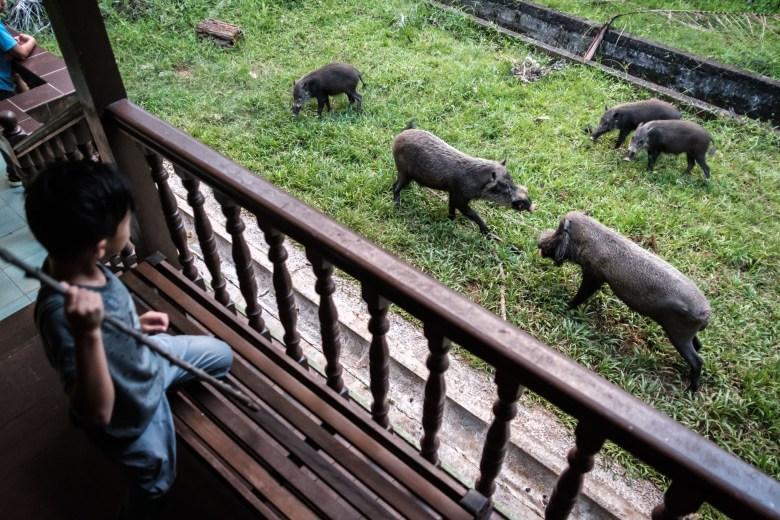 Malaysia Bako National Park 069