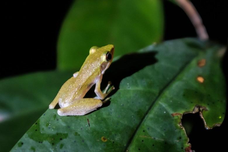 Malaysia Bako National Park 079
