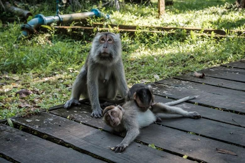 Malaysia Bako National Park 089