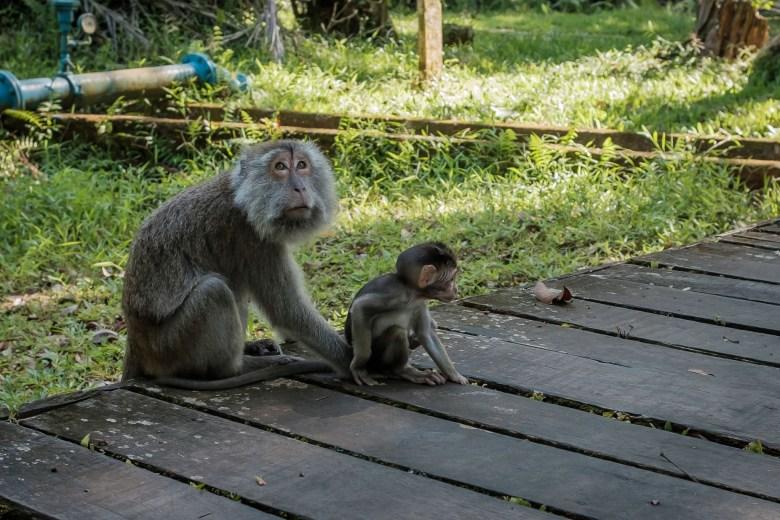 Malaysia Bako National Park 091