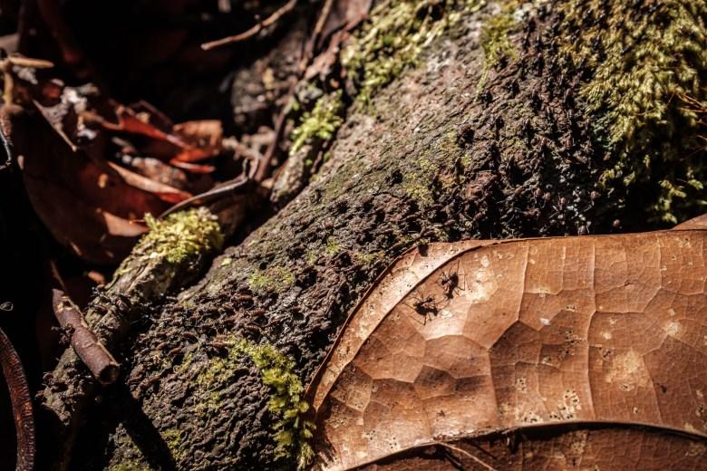 Malaysia Bako National Park 110