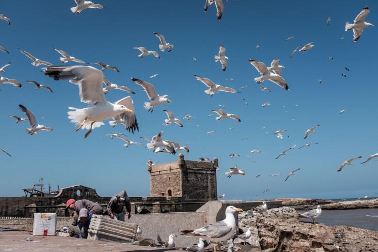 Morocco Essaouira 06