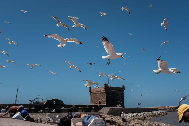 Morocco Essaouira 37