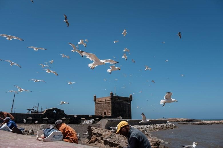 Morocco Essaouira 38