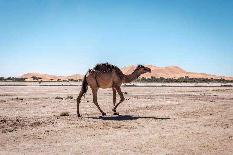 Morocco Merzouga 034