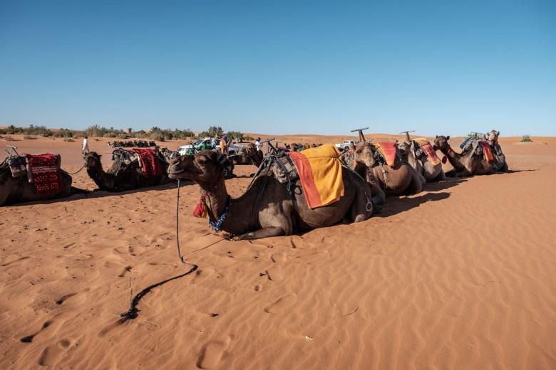 Morocco Merzouga 045