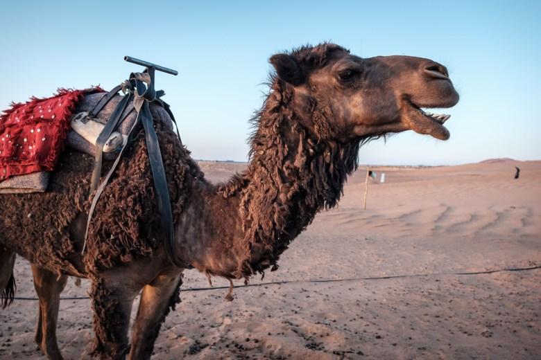 Morocco Merzouga 109