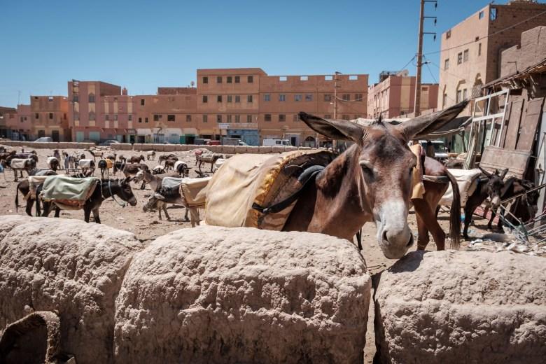 Morocco Rissani 05